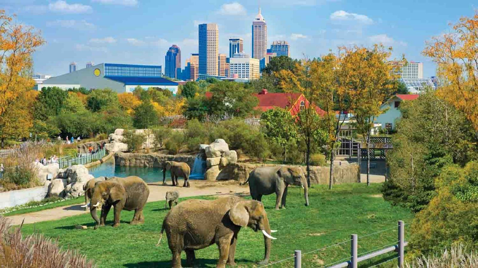 Things to Do in Indianapolis - Indianapolis Zoo